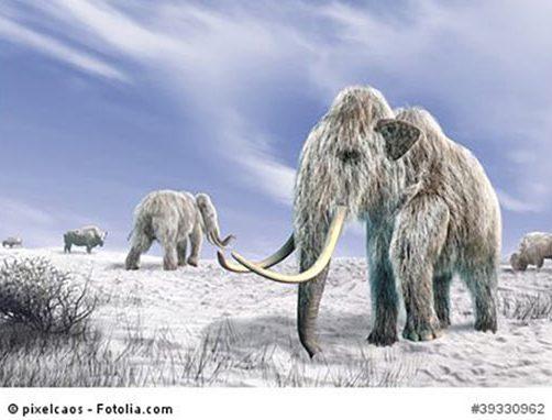 frage_mammuts_stadtgeschichtchen